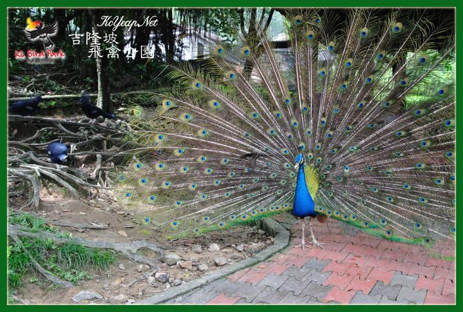 吉隆坡之旅:吉隆坡飞禽公园